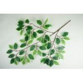 Ветка фикуса 60 листьев с белым кантом ЗК065