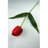 Тюльпан одиночный ЦС001к
