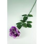 Роза одиночная ЦС122ф
