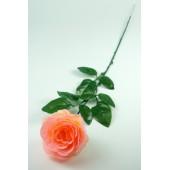 """Роза одиночная """"Клементина"""", ЦС146перс"""